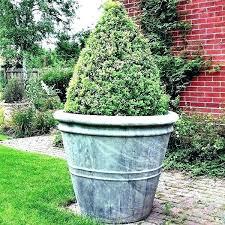 best plants for pots outdoor best plants for large outdoor pots best plants for pots outdoor
