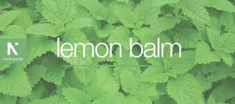 lemon balm tincture side effects
