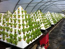 how to build a hydroponic garden. sweet inspiration hydroponic gardens manificent design 1000 images about diy gardening on pinterest how to build a garden