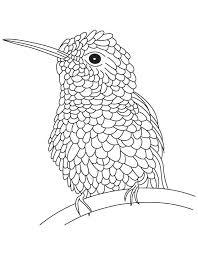 Small Picture Textured hummingbird coloring page Download Free Textured