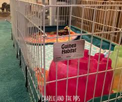 setting up midwest guinea pig cages