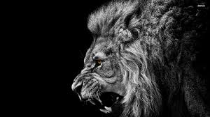 roaring lion wallpaper hd 1080p. Simple Wallpaper HD  With Roaring Lion Wallpaper Hd 1080p H