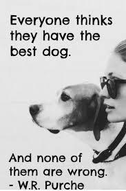 Dog Best Friend Quotes Mesmerizing Inspirational Quotes For Dog Lovers Inspirational Quotes For Dog