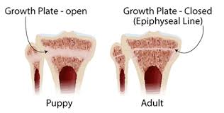 Growth Plate Closure Chart New Appropriate Exercise