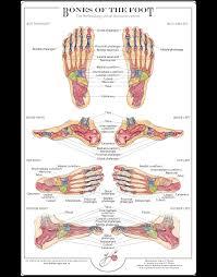 Foot Chart Bones Of The Foot Chart Balancing Touch Reflexology