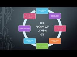 Lymph Flow Chart The Lymphatic System Flow Of Lymph Youtube