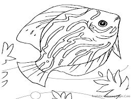 26 Sea Fish Coloring Pages Ocean Fish Coloring Pages Realistic
