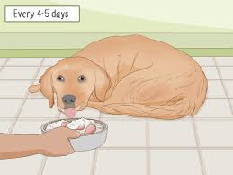How To Prepare Home Cooked Food For Your Dog 12 Steps