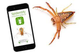 Spider Identification Chart Australia Spidentify Hashtag On Twitter