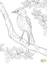 Bird Coloring Pages Realistic Valid Realistic Florida Scrub Jay Nice
