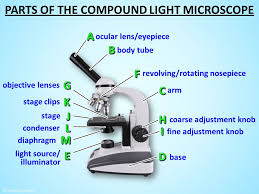 Parts Of The Microscope Microscope Parts Ppt Video Online Download