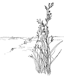 Small Picture Epic Grass Coloring Page 25 With Additional Free Coloring Kids
