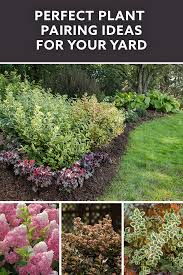 plant and flower combinations that are perfect for your yard garden or landscape hashtags