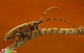 شركة مكافحة الحشرات بالرياض0549233822 Images?q=tbn:ANd9GcS_0OAk8Oh7G49mL3NhgDArOLOp3kvq0W2f4Chi6eBUZUCWa_yy