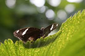 insecte botanique noir invertébré fermer exotique propager macrophotographie arthropode pollinisateur maison tropicale maison papillon
