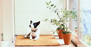 the best cat and dog safe plants according to experts
