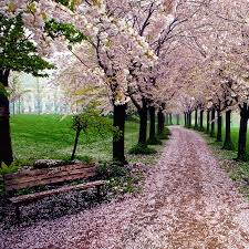 Small Picture Pathway of trees with red leaves Pathway Pinterest