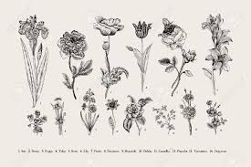 Botany Set Vintage Flowers Black And White Illustration In