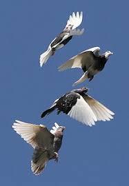 birds flying. Unique Flying Bird Flight With Birds Flying F