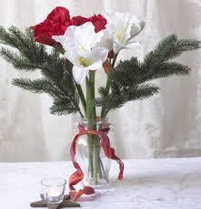 Schöner Die Amaryllis Nie Blühen Blumensteckbrief Artfleur