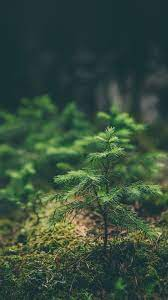 Green Nature iPhone Wallpapers - Top ...