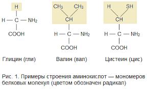 Реферат по химии на тему классификация белков net clip image001