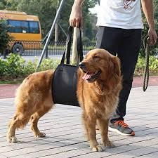 Hier hilft die hunde tragehilfe dem halter, das tier ohne viel kraftaufwand zu befördern. Der Huft Und Kniegelenke Smandy Hundegeschirr Hunde Tragehilfe Gehhilfe Gehhilfe Hund Fur Rehabilitation Der Wirbelsaule Des Hundes Sicherheitsgeschirre