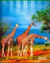 "Бизнес <b>тетради АппликА Тетрадь</b> ""3 жирафа"", А5, 96 листов ..."
