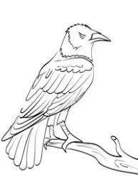 Kleurplaten Vogel Topkleurplaatnl