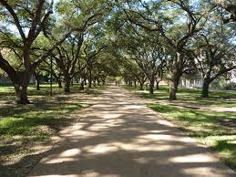 rice university campus trees. Those For Rice University Campus Trees