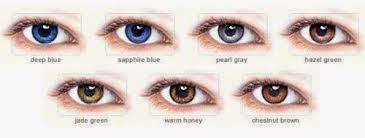 Shades Of Brown Eye Color Chart Www Bedowntowndaytona Com