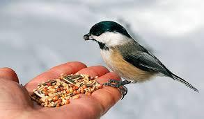 Výsledek obrázku pro děti krmí ptáčky