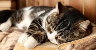 Cat Years To Human Years Petfinder