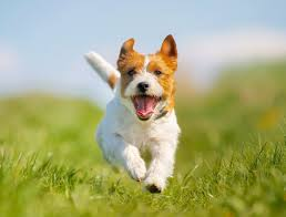 environmental allergens in dogs