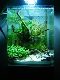 Nano Aquarium Design Layout By Phanou Aquascaping Aquarium Design Aquarium