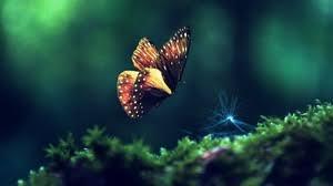 desktop wallpaper butterfly.  Desktop Butterfly Wallpapers Backgrounds Imagesu2014 Best Butterfly Desktop Wallpaper  Sort Wallpapers By Ratings And Desktop Wallpaper U