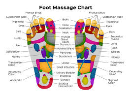 Cranial Reflexology Chart Foot Reflexology Chart With Description Of The Internal