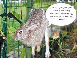 fence to keep rabbits out rabbit proof garden fence keep rabbits out home design ideas and
