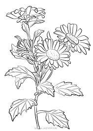 Bộ tranh tô màu hoa cúc tổng hợp đầy đủ nhất cho bé - Jadiny