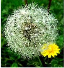 Resultado de imagen de SEED PLANTS REPRODUCTION