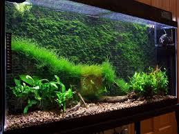 Cool Aquariums Cool Thing To Do With Java Moss Aquascape Eden Pinterest
