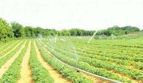 Strawberry Irrigation Manitoba Agriculture Province Of Manitoba