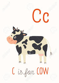 Alphabet Card C Is For Cow Abc Kids Wall Art Alphabet Card Royalty Free
