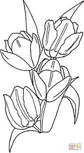 Tulips Coloring Page From Tulip Category