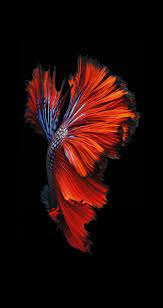 Download iPhone 6s/6s Plus Wallpapers