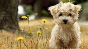 dogs wallpaper. Plain Dogs Lovely Dog Wallpaper  Dogs She So Great To Dogs Wallpaper L