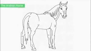 Top 25 Free Printable Horse Coloring Pages Youtube