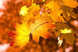 Bildresultat för löv