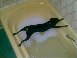 Image result for cant bath