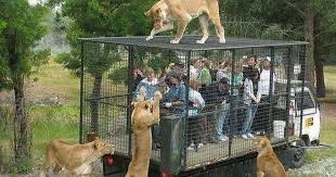 zoo animals in cages.  Animals In Zoo Animals Cages N